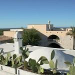 Dai tetti di Masseria San Felice la vista si estende sugli uliveti biscegliesi, fino al mare